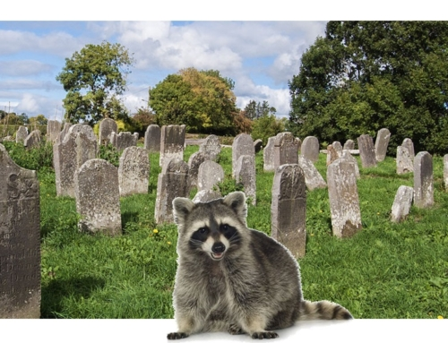 What a Dead Raccoon and a Monday Morning taught me about our team
